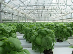 Heat is used in food manufacturing, such as greenhouses.